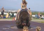 Obrázek atrakce Rodeo bizon